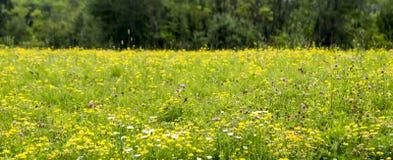 I fiori nelle alpi della Slovenia, Immagini Stock Libere da Diritti