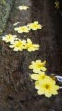 I fiori non significano cadere Fotografia Stock Libera da Diritti