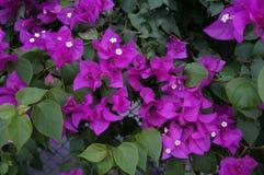I fiori porpora, luminosità ed attira fotografia stock libera da diritti