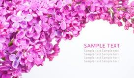 I fiori porpora su fondo bianco con il campione mandano un sms a Immagine Stock