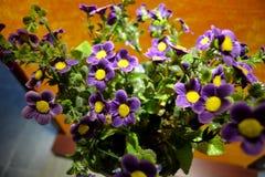 I fiori in primavera fotografia stock libera da diritti