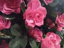 I fiori rossi fanno la gente che lo vede felice fotografia stock libera da diritti