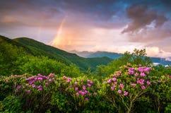 I fiori scenici della primavera delle montagne appalachiane abbelliscono Ridge blu fotografia stock libera da diritti