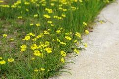 I fiori selvaggi Fotografie Stock