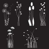 I fiori selvaggi di fioritura hanno separato su un fondo nero Fotografie Stock Libere da Diritti
