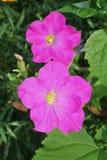 I fiori selvaggi porpora hanno strutturato l'arte floreale di stile di impressionismo Immagini Stock Libere da Diritti