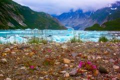 I fiori selvaggi si avvicinano al ghiacciaio di Mc'Bride nel parco nazionale della baia di ghiacciaio. Fotografie Stock