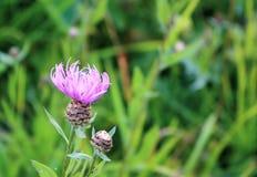 I fiori selvaggi si chiudono su sul fondo dell'erba verde di estate fotografia stock