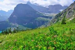 I fiori selvaggi su alto paesaggio alpino sul ghiacciaio di Grinnell trascinano in Glacier National Park, Montana Fotografia Stock Libera da Diritti