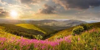 I fiori selvaggi sulla montagna completano al tramonto Immagini Stock