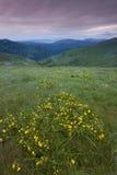 I fiori selvaggi sulla montagna completano al tramonto Fotografia Stock
