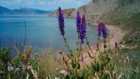 I fiori selvaggi sulla riva di Koktebel abbaiano, la Crimea Fotografie Stock
