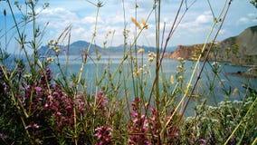 I fiori selvaggi sulla riva di Koktebel abbaiano, la Crimea Fotografie Stock Libere da Diritti