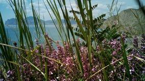 I fiori selvaggi sulla riva di Koktebel abbaiano, la Crimea Fotografia Stock