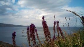 I fiori selvaggi sulla riva di Koktebel abbaiano, la Crimea Immagini Stock