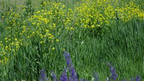 I fiori selvaggi sulle colline si chiudono su archivi video