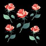 I fiori sono aumentato Immagini Stock