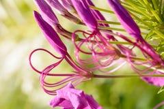 I fiori sono bei e rinfrescare immagine stock