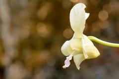 I fiori sono bei e rinfrescare fotografie stock libere da diritti