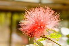 I fiori sono bei e rinfrescare immagini stock libere da diritti