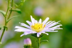 I fiori sono bei e rinfrescare immagine stock libera da diritti
