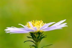 I fiori sono bei e rinfrescare fotografia stock libera da diritti