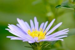 I fiori sono bei e rinfrescare immagini stock