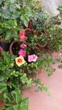 I fiori sono le cose più dolci Dio fatto mai ed hanno dimenticato di mettere un'anima in Fotografia Stock