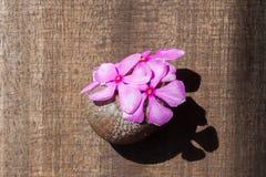 I fiori sono sistemati nelle coperture Fotografia Stock Libera da Diritti