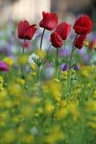 I fiori stupefacenti nell'Israele fotografie stock