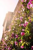 I fiori sulla parete Immagini Stock