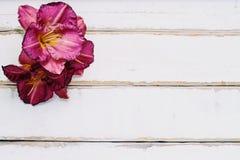 I fiori sulla tavola Immagini Stock Libere da Diritti