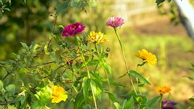 I fiori variopinti di estate fanno il giardinaggio, letto di fiore nel parco archivi video