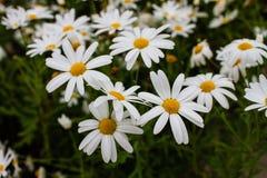 I fiori variopinti nel giardino immagine stock libera da diritti