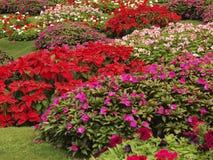 I fiori variopinti nel parco immagini stock libere da diritti