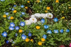 I fiori variopinti si inverdiscono il parco a Tokyo Giappone il 31 marzo 2017   Bello fondo della natura Fotografia Stock Libera da Diritti