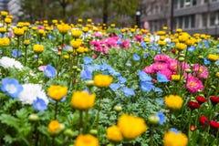I fiori variopinti si inverdiscono il parco a Tokyo Giappone il 31 marzo 2017   Bello fondo della natura Fotografie Stock Libere da Diritti