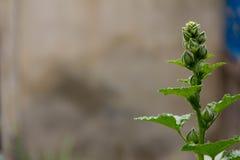 I fiori verdi superiori stanno fiorendo Fotografie Stock Libere da Diritti