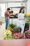 I fioristi accoppiano il lavoro con i fiori ad una serra Fotografia Stock Libera da Diritti