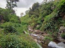i fiumi esaminano la foresta immagine stock libera da diritti