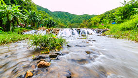 I fiumi in grandi foreste sono abbondanti immagini stock libere da diritti