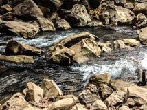 I floden Arkivfoton