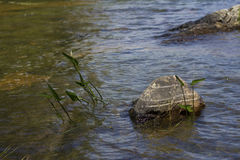 I floden Royaltyfria Bilder
