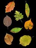 I fogli di 8 specie in autunno Immagini Stock