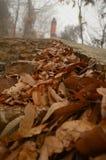 I fogli di autunno fotografia stock libera da diritti