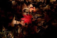 I fogli di autunno Immagine Stock