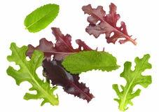 I fogli gastronomici dell'insalata hanno isolato Immagine Stock