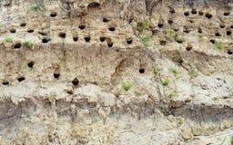 I fori hanno scavato dagli swallows nella banca di fiume Immagini Stock