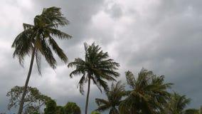 I forti venti hanno scosso gli alberi del cocco prima di una tempesta nella stagione delle pioggie stock footage