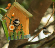 I found our home - Chickadees. Carolina Chickadee inside a little bird house and his mate in the background waiting royalty free stock images